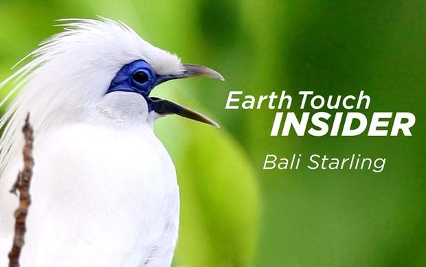 Earth Touch Insiders Phuket Web Media