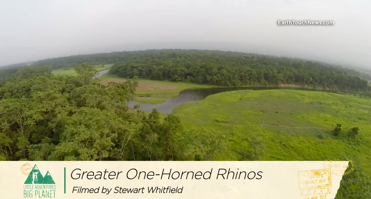One Horned Rhino Phuket Web Media