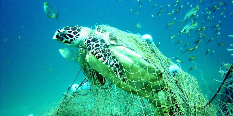 Endangered Marine life Phuket Web Media