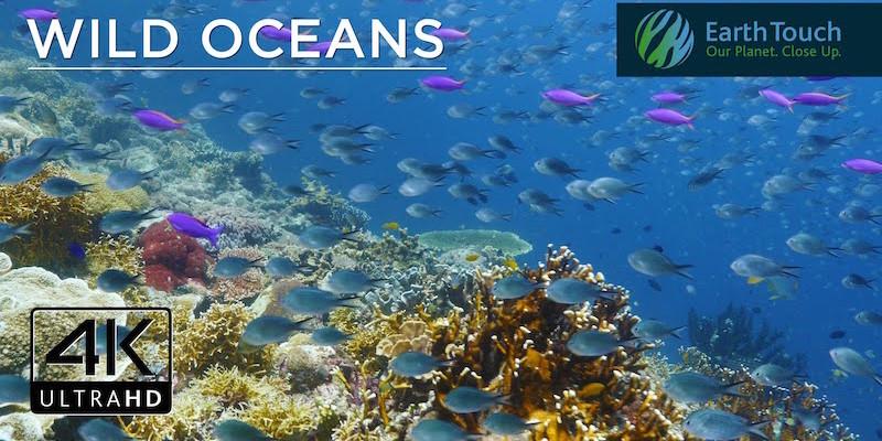 Diving Philippines Phuket Web Media